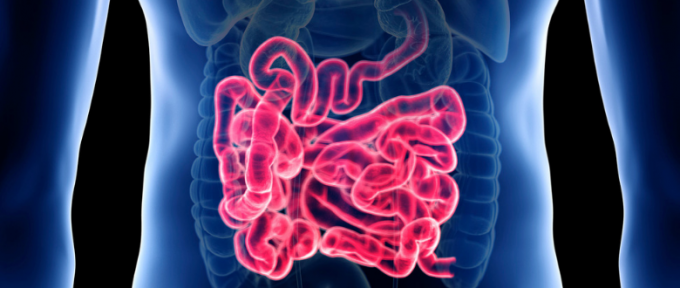 picture of bowel anatomy